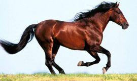 Mơ thấy ngựa là phúc hay họa, đánh con gì?