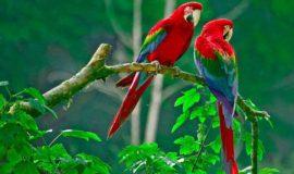 Mơ thấy chim là điềm dữ hay lành, đánh con đề bao nhiêu dễ ăn?